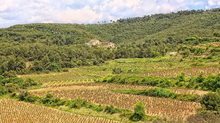 LLOPART vynuogynai