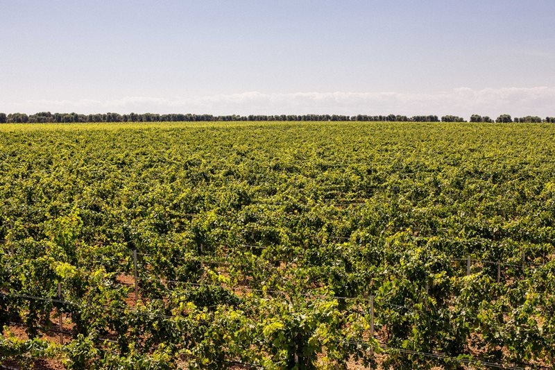 Masca del Tacco vineyard