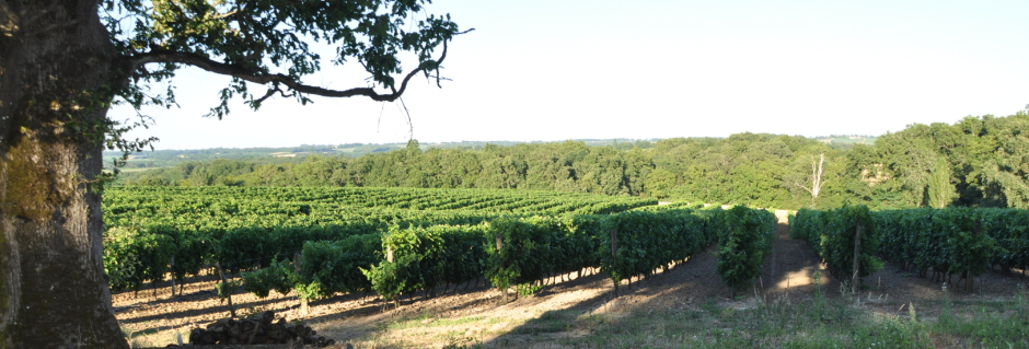 Domaine Horgelus vynuogynai